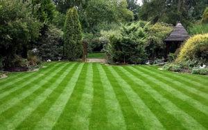 Делаем красивый газон своими руками