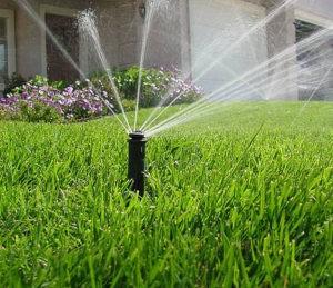 Правильный полив газона